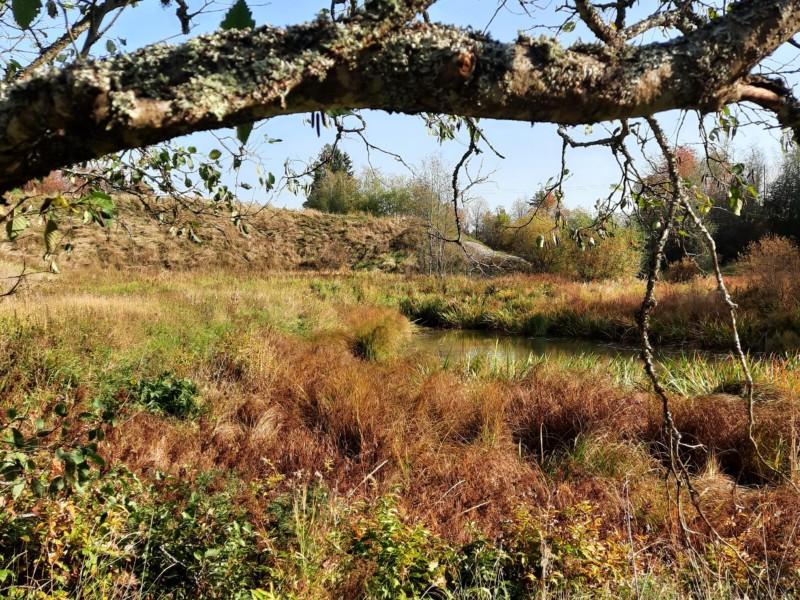 Maisemaa Tarvasjoen luontopolun varrelta