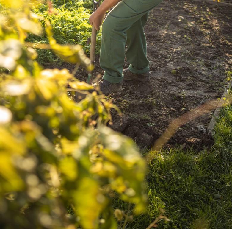 Viljelijä kääntää lapion kanssa maata viljelypalstalla.